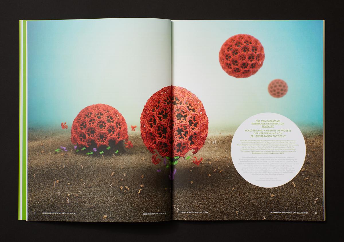FMP Forschungsbericht 2017/2018 Doppelseite aufgeschlagen auf schwarzem Untergrund vollformatiges farbiges Bild von Zellen 3d rendering