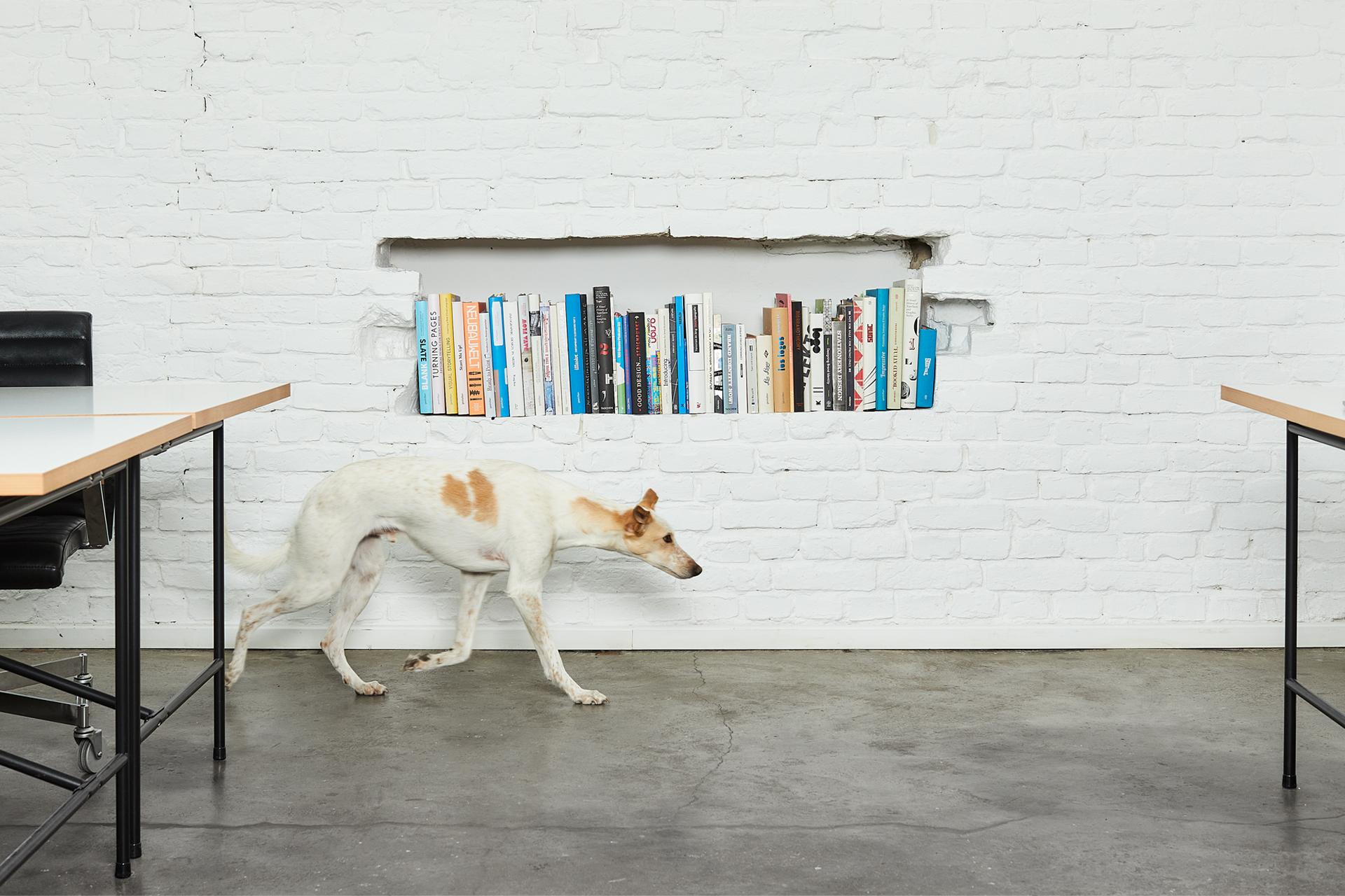kraut und konfetti designstudio designagentur büro hund backsteinwand bücherregal